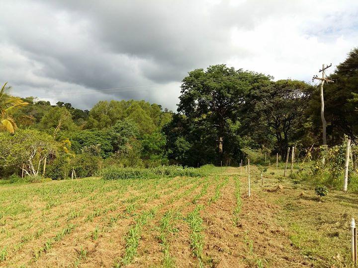 Cultivo orgânico da terra