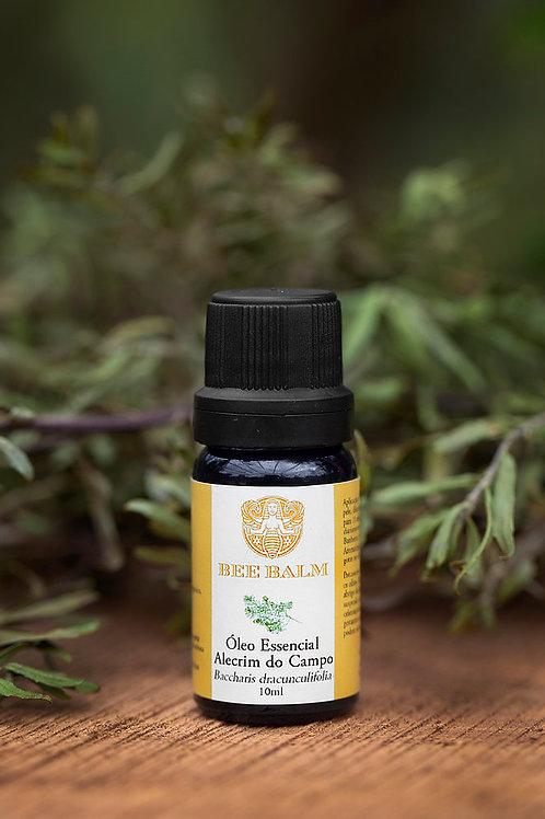 Óleo essencial alecrim do campo - Bee Balm 10ml