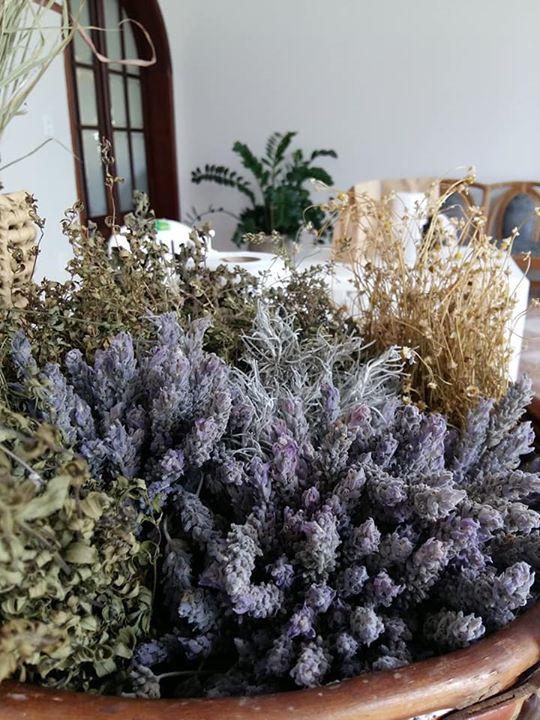 ervas aromáticas lavanda