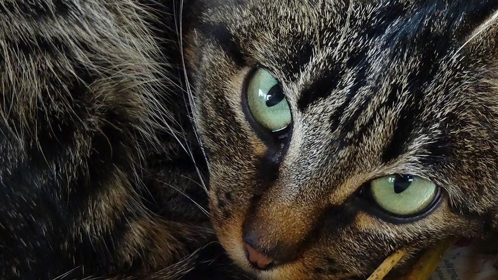 cat-616181_1280.jpg