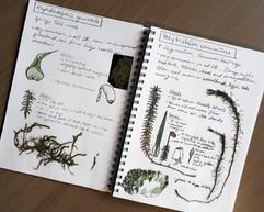 Crave-Painting-my-botany-sketchbook.jpg