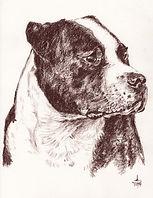 Pastel Portrait - Hand Drawn Pets.