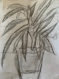 Victoria plant.jpg