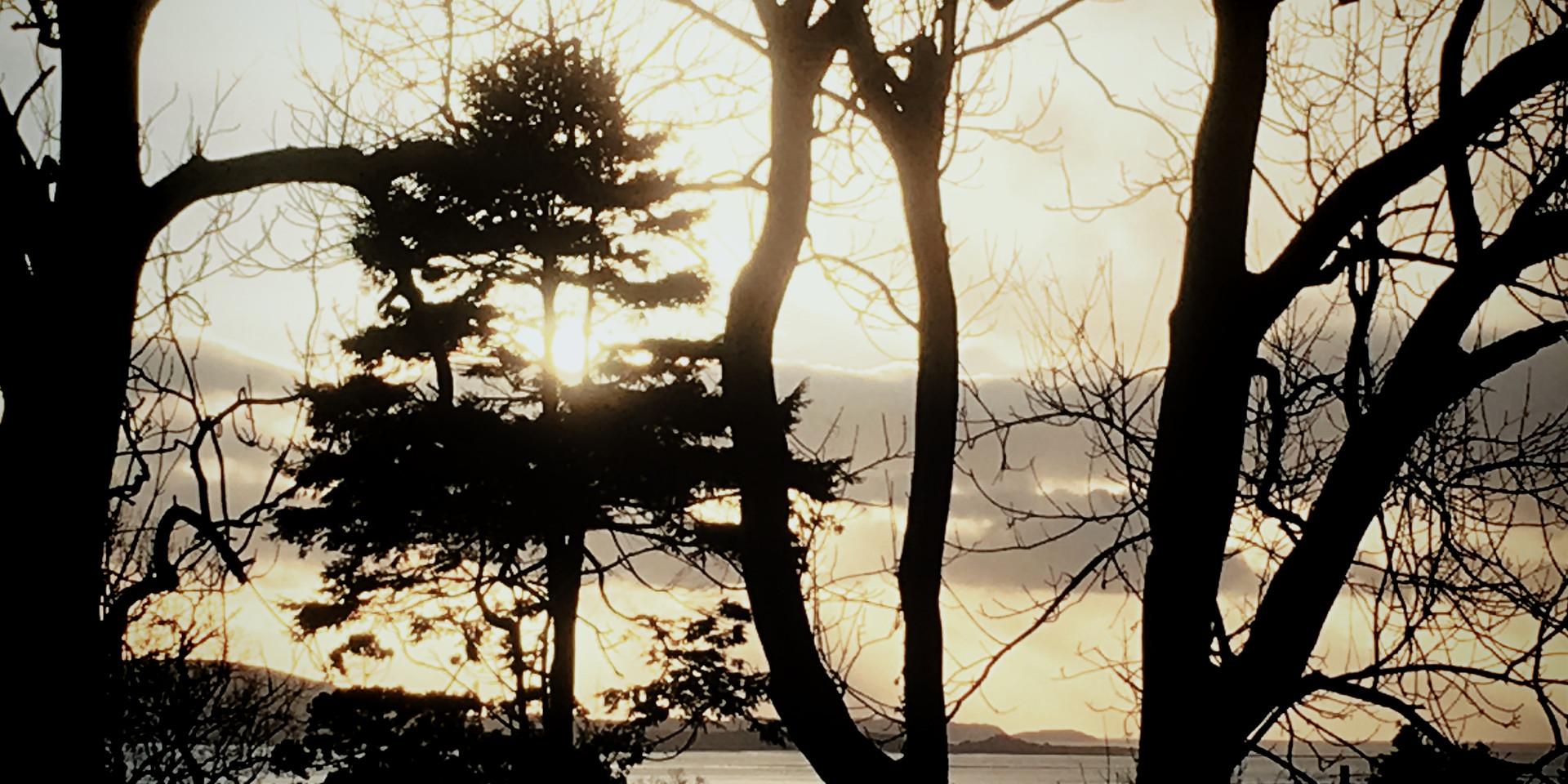 tree sea.jpg