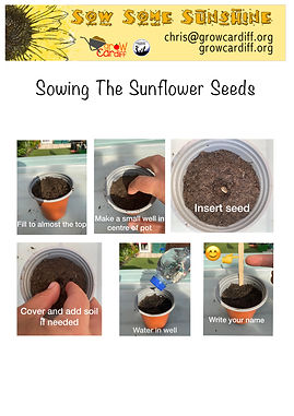 Sowing The Sunflower - Photo Guide.jpg