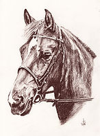 Pastel Horse Portrait - Hand Drawn By Bill Taylor-Beales.