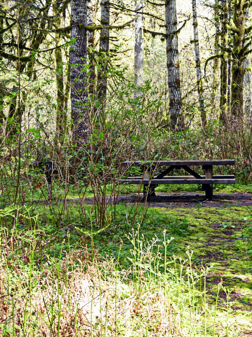 picnic-table-in-the-woods.jpg