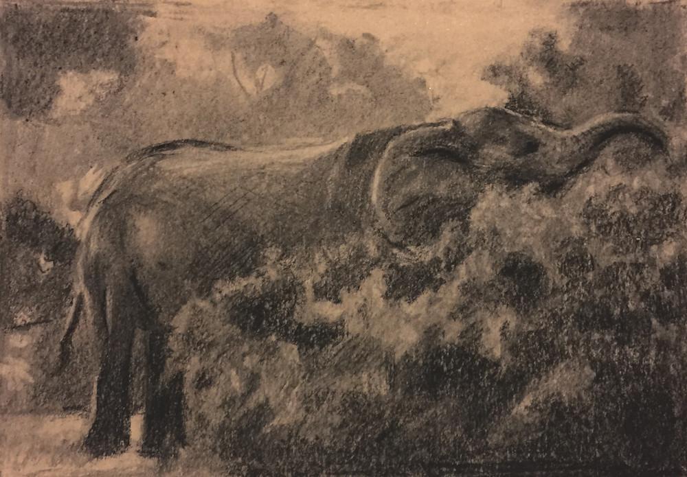 30/09/2015 : l'éléphant - charcoal 20 x 20 cm