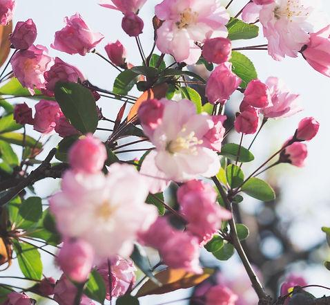 masaaki-komori-NoXUQ54pDac-unsplash_edit