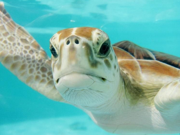 turtle -2086549_1920.jpg