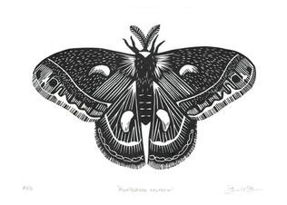 DDewees_Hyalophora-cecropia.jpg