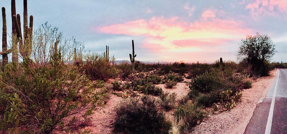 cactus, desert, saguaro national park, spring, travel, sunset