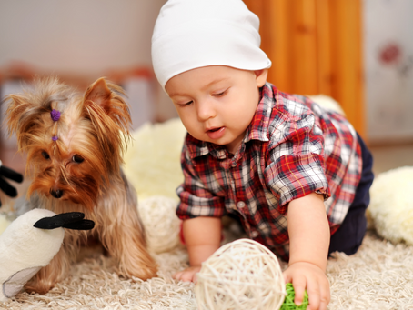 Helping Children to Conquer Their Fears Over Dogs