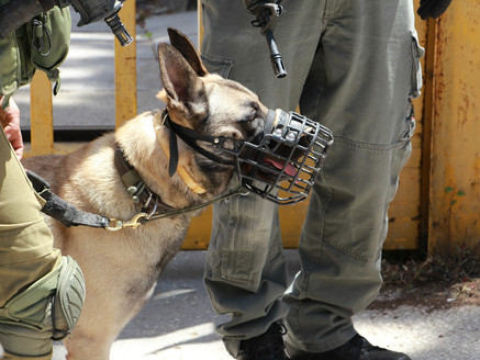 Story of a Multicolored Military Working Dog