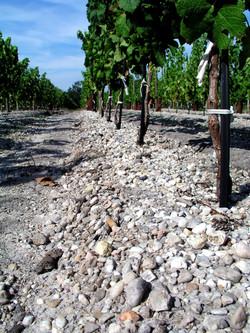 Vignes Château les Marceaux