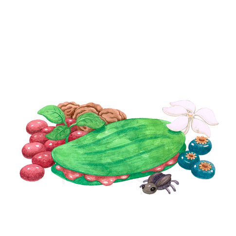 leaf sandwich, berries, flowers, nuts, and a bug