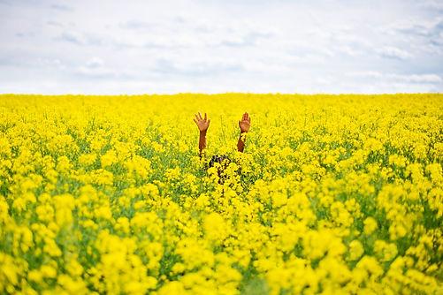 hands in sunflower field - 2371x1581.jpg