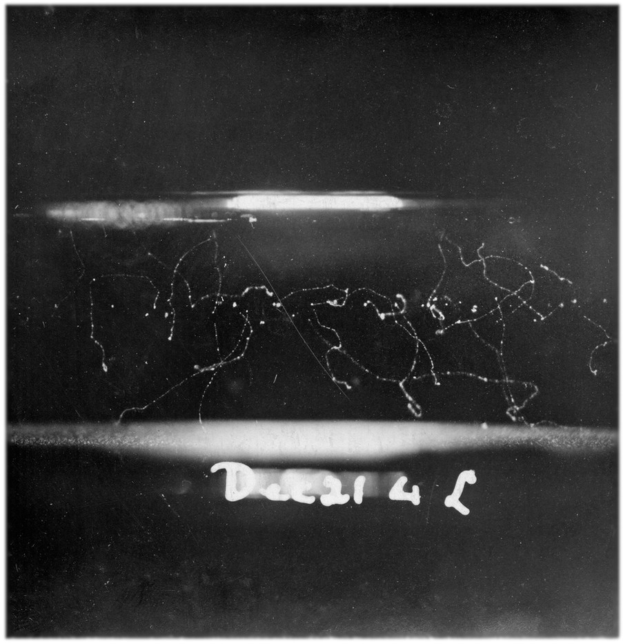 Cloud Traces I. 2017. 3x1.3 m. Printed image on burlap. C.T.R Wilson, Cloud Chamber Photographs, c.1911-13. In deposit at the Royal Scottish Academy of Art & Architecture collections. © Image: Estate of C.T.R Wilson/Sandy Wood. © Work: Linarejos Moreno.
