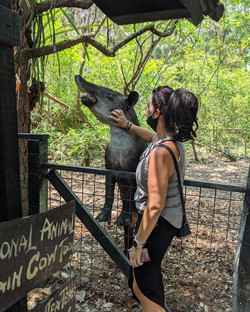 Visit the Belize Zoo