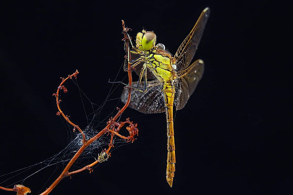 Macro photography of insects