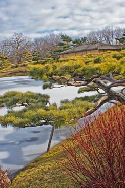 Japanese Garden in Winter