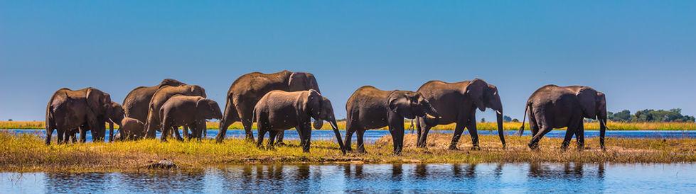 Africa Safari | Ehabla