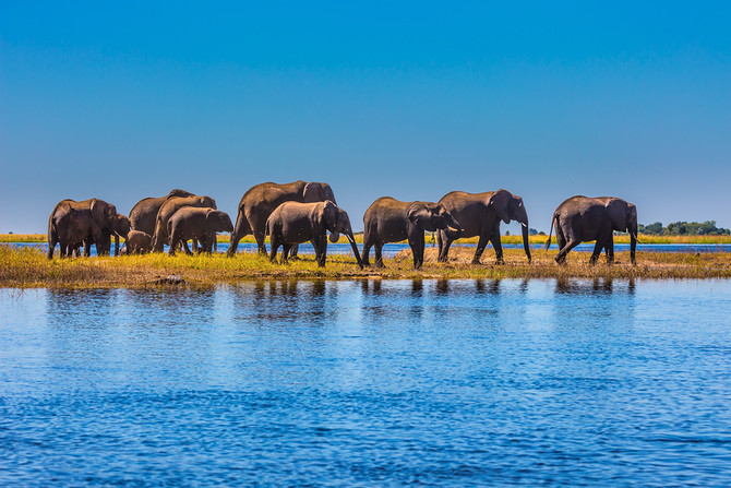 5 Must See Game Reserves in Africa