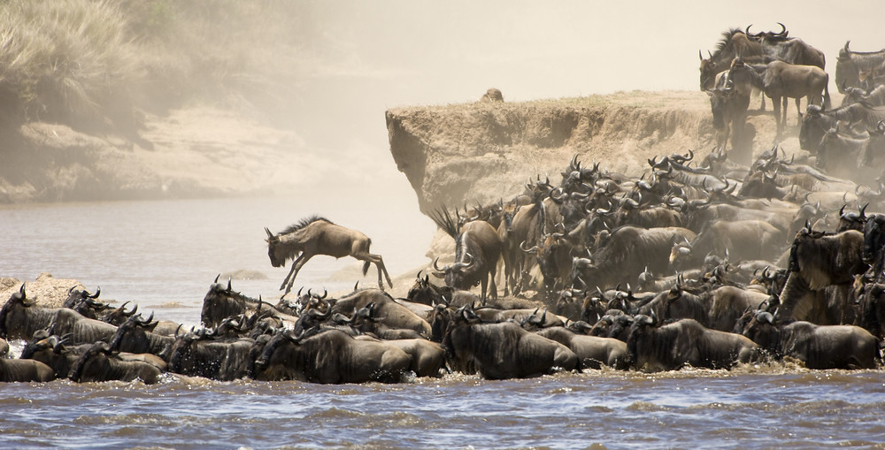 The great migration african safari