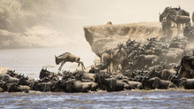 Highlights of a night safari during the Great Migration