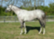 Havana Stallion Standing at Rancho Santa Rosa