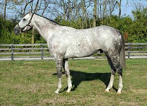 Havana Stallion Standing at Rancho Santa Rosa