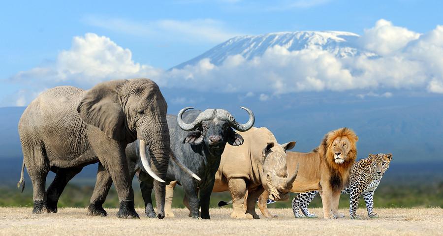 Big 5 African Safari