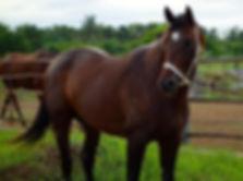 Rancho Santa Rosa Stud Philippines Racehorses Orahte