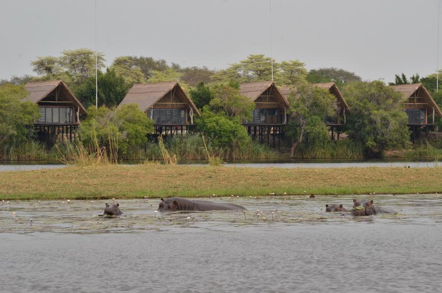 Chobe Water Villas Wildlife