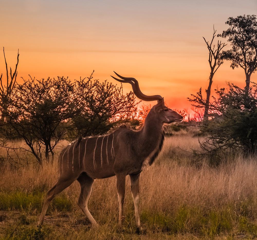 Africa Safari packages