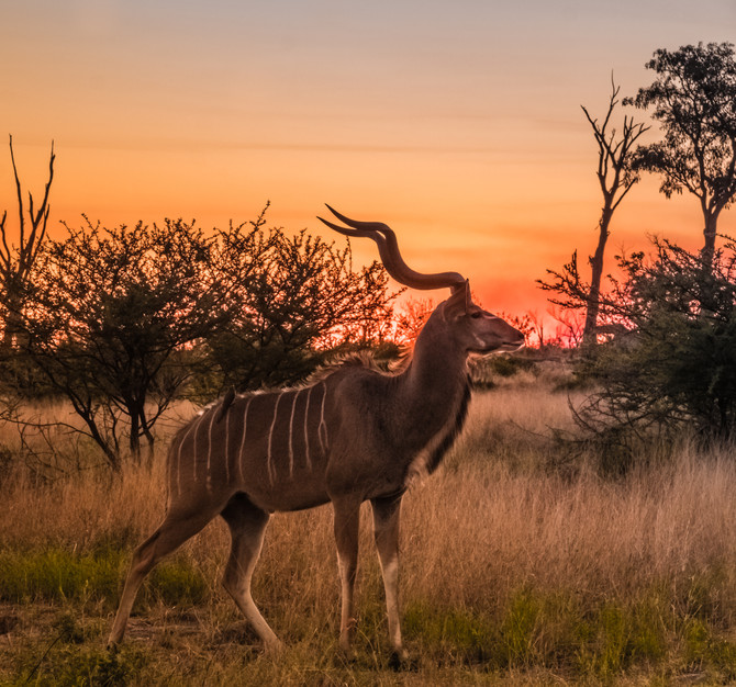 Animals You Didn't Know To Expect on African Safari