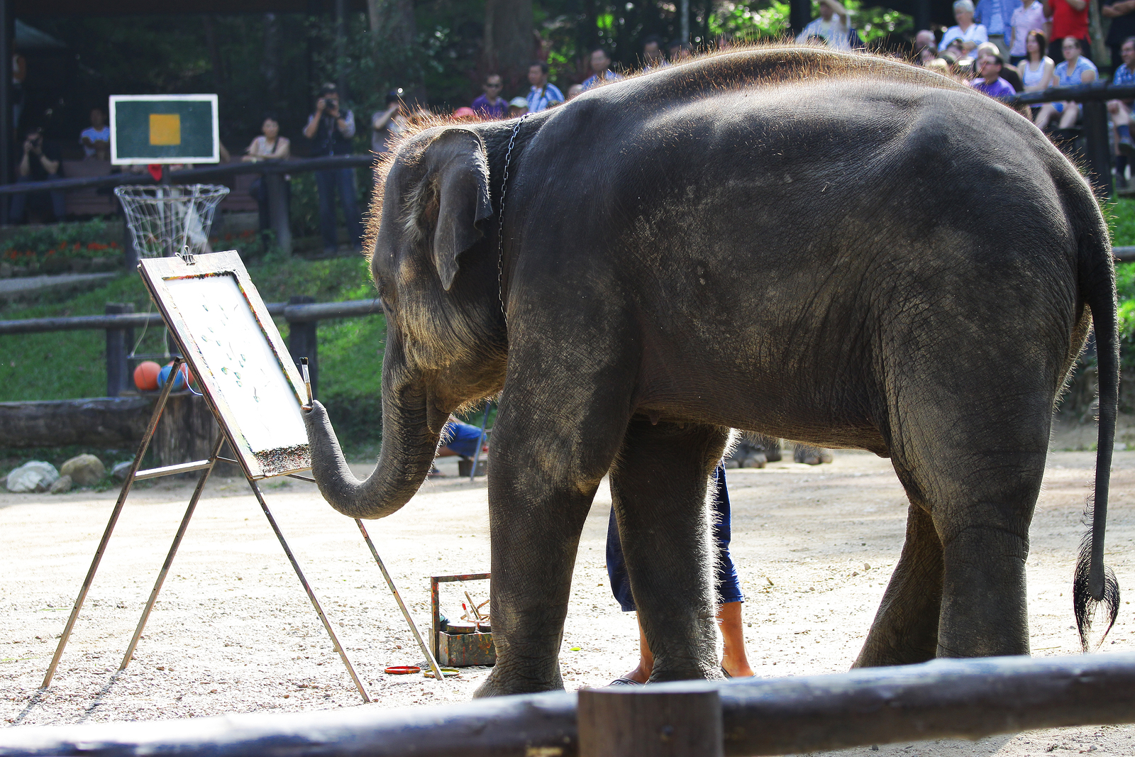 Elephant Drawing at Lampang Thailand