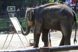 Elephant Drawing at Lampang Thailand