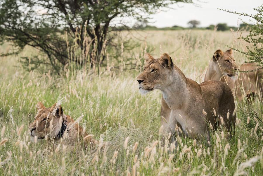 African Safari EHabla Travel