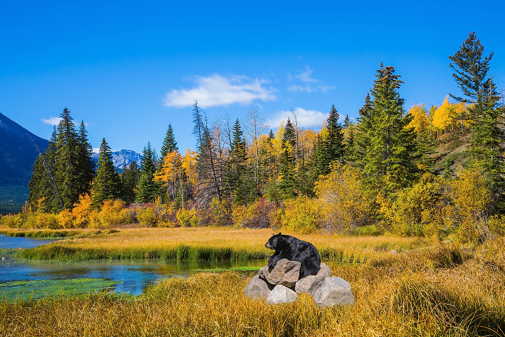 Ecological Tourism in Canada