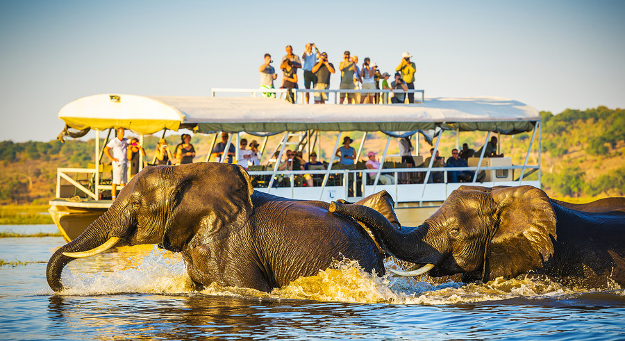 Chobe National park Africa Safari