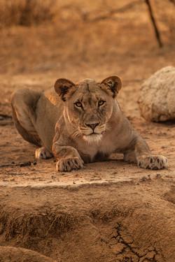 Luxury African Safari Packages