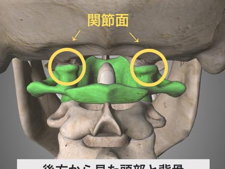 頭と背骨の関係 Part2