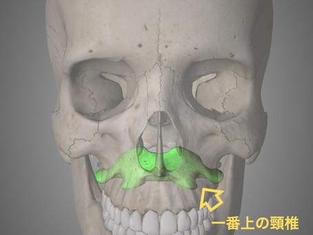 頭と背骨の関係  Part1