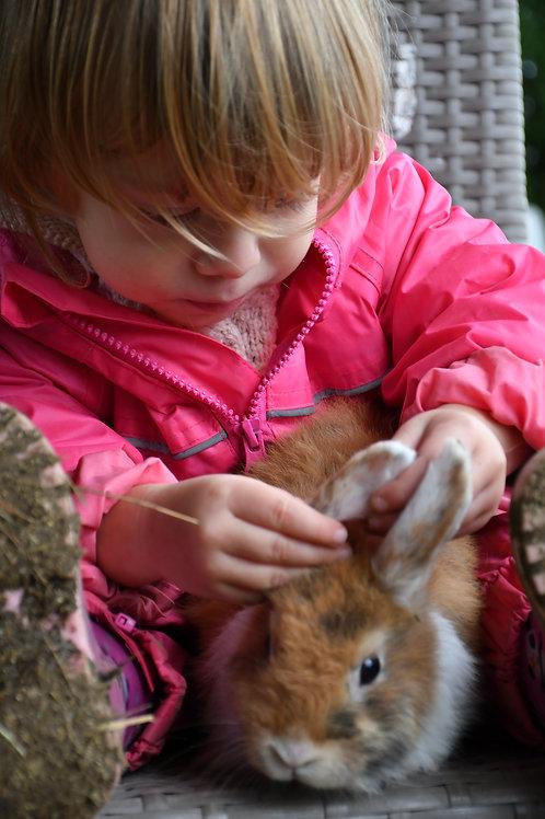 Réservation de votre lapin
