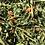 Thumbnail: Morceaux de Carottes et Fânes de carottes