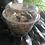 Thumbnail: Pois  vert séchés (le pot)