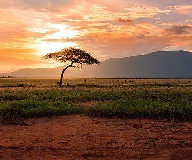 Africa-general-pic.jpg.optimal.jpg