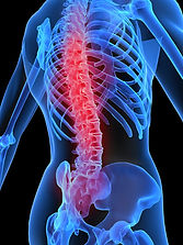 anorexia y osteoporosis - cittral