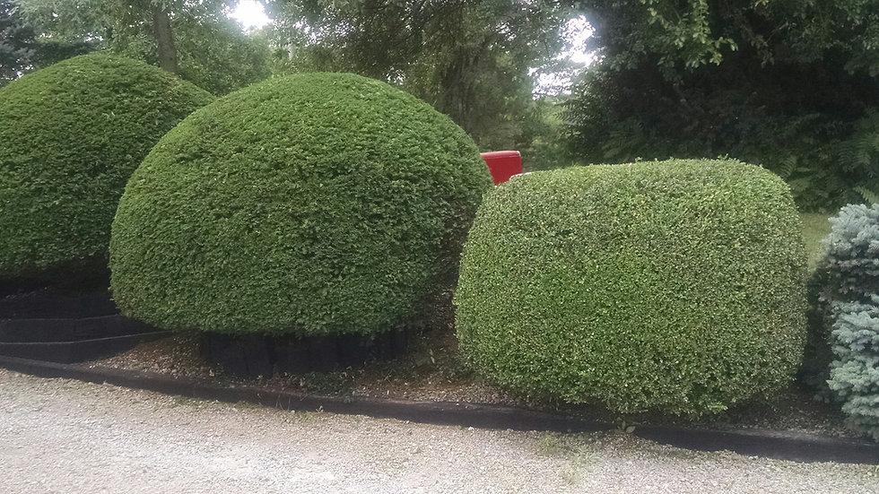 Bush and Shrub Trimming